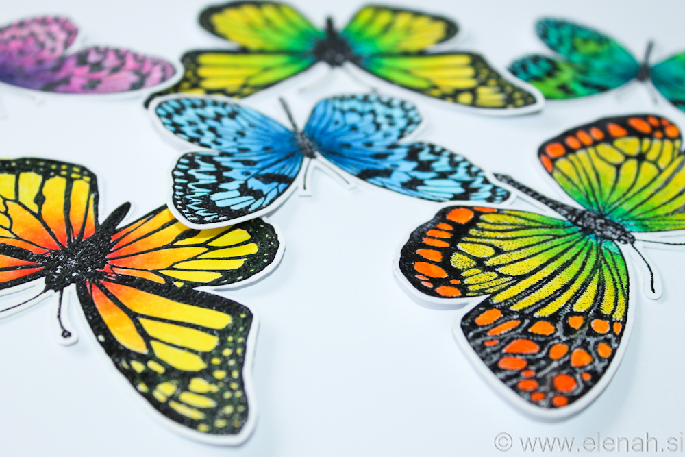 Day 358 butterfly bright colors 3